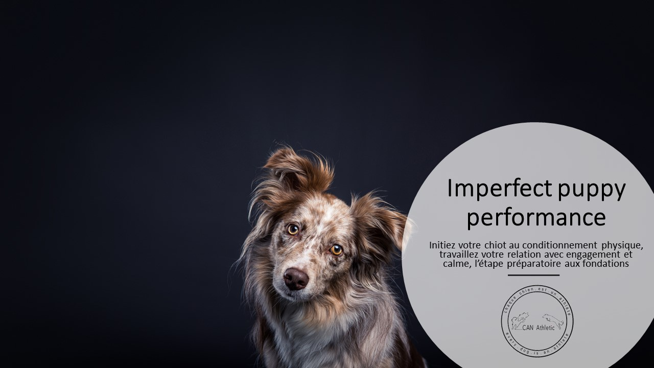 Imperfect Puppy Performance